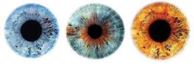 iridologia3.jpg